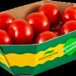 Red round cherry tomato