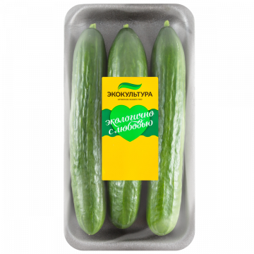 Medium-fruited cucumber